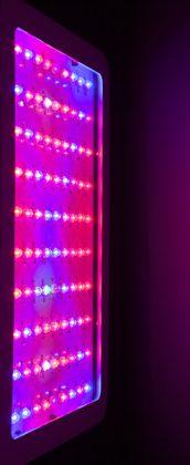 UV-Light-600