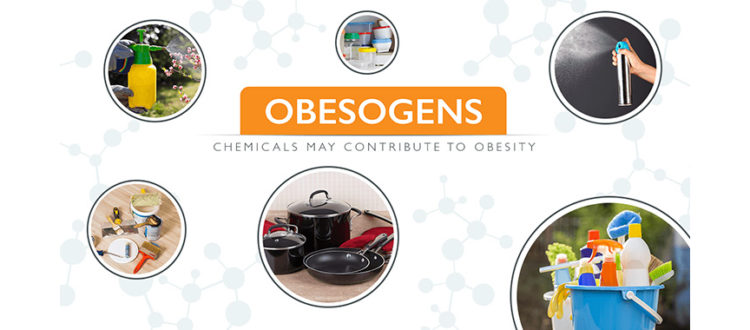 DEFINING OBESOGENS: THE CHEMICALS IMPACT & PRESENCE IN THE HOUSEHOLD